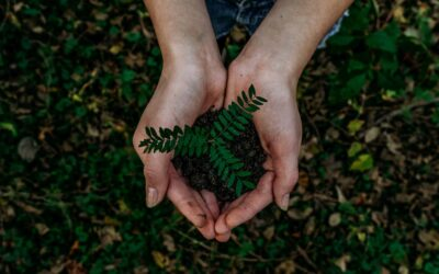 Why it's so difficult to agree on matters of sustainability